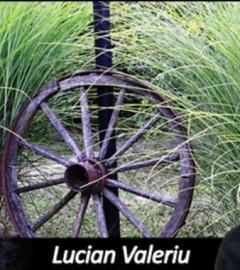 scurt pamflet despre orgoliu lucian valeriu